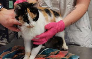 katzenbaby-weiblich-sk009-21-start-ins-leben 10 Katzen suchen Start-ins-Leben Paten