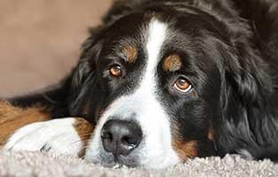 kuehnemund-blog-glaukom Kompetente Tierarztberatung bei Fragen rund um Dein Tier