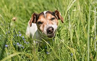 kuehnemund-blog-hund-fisst-grass Kompetente Tierarztberatung bei Fragen rund um Dein Tier