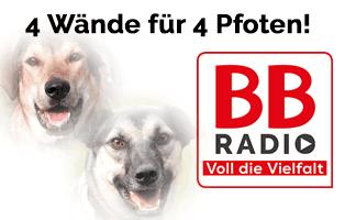 BB_RADIO_beitragsbild Eichenprozessionsspinner