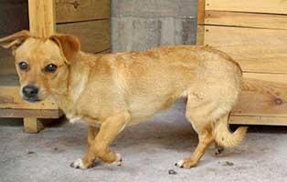 Huendin-Polen-168369-2-Jahre 14 Hunde aus Polen suchen Aufnahmepaten