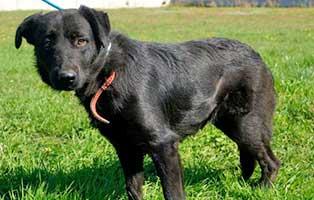 Huendin-Polen-268342-2-Jahre 14 Hunde aus Polen suchen Aufnahmepaten