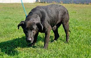 Huendin-Polen-268370-11-Jahre 14 Hunde aus Polen suchen Aufnahmepaten