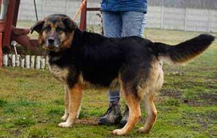 Huendin-Polen-321586-6Jahre 14 Hunde aus Polen suchen Aufnahmepaten