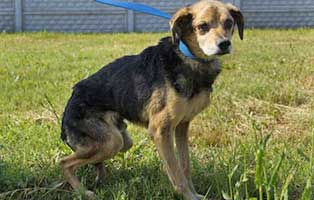 Ruede-Polen-072264-16-Jahre 14 Hunde aus Polen suchen Aufnahmepaten