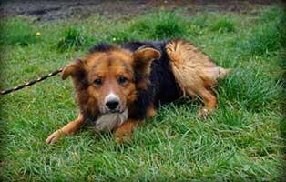 Ruede-Polen-205428-13-Jahre 14 Hunde aus Polen suchen Aufnahmepaten