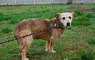 Ruede-Polen-343360-12-Jahre 14 Hunde aus Polen suchen Aufnahmepaten