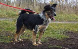 Ruede-Polen-367475-6-jahre 14 Hunde aus Polen suchen Aufnahmepaten