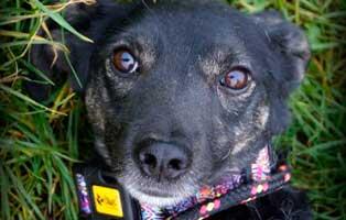 Ruede-Polen-860563-3-Jahre 14 Hunde aus Polen suchen Aufnahmepaten