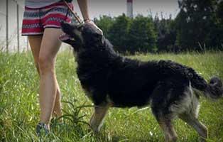 Ruede-Polen-860673-6Jahre 14 Hunde aus Polen suchen Aufnahmepaten