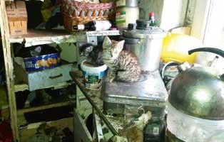 animal-hoarding-katzenbaby Die Analdrüsen beim Hund