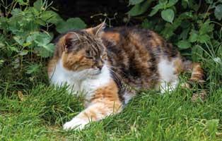 beitragsbild-jahresbericht-netzschkau-2019 Katzenstation Netzschkau