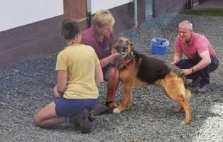 beitragsbild-jahresbericht-unterheinsdorf-2019 Unsere Tierheimtiere