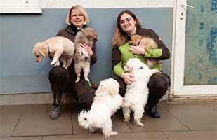 bueckeburg-tiedtke-hunde Die Analdrüsen beim Hund