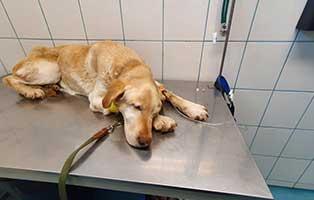 huendin-ornella-krebs-verstorben Auslands-Fonds - Tierschutz ohne Grenzen