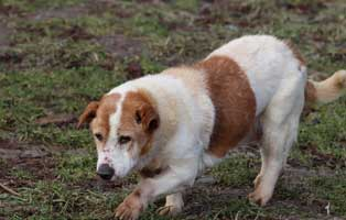 hund01-opa-polen-aufnahmepatenschaft Rettet die Opas! Drei Hunde aus Polen suchen Aufnahmepaten