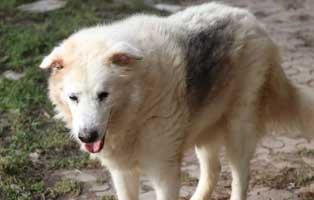 hund02-opa-polen-aufnahmepatenschaft Rettet die Opas! Drei Hunde aus Polen suchen Aufnahmepaten