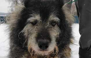 hund03-opa-polen-aufnahmepatenschaft Rettet die Opas! Drei Hunde aus Polen suchen Aufnahmepaten
