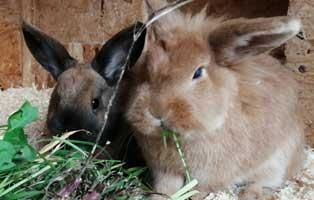 kaninchen-hanni-nanni-patentier Cooper - Der Unerzogene