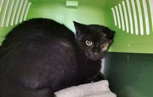 katze-thueringen-augenoperation-genesung Katze aus Thüringen brauchte eine Augenoperation