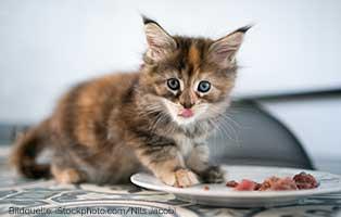 katzen-ratgeber-kitten-fuettern-Nils-Jacobi Vergiftung bei Hunden und Katzen
