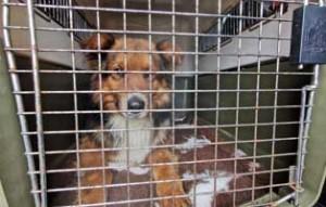 polenhunde-ankunft-transportbox-300x191 14 Hunde aus Polen suchen Aufnahmepaten