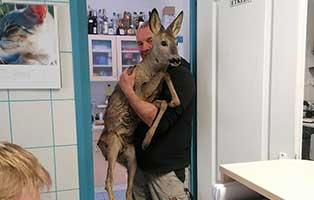 rehrettung-bekescsaba-behandlungsraum Auslands-Fonds - Tierschutz ohne Grenzen