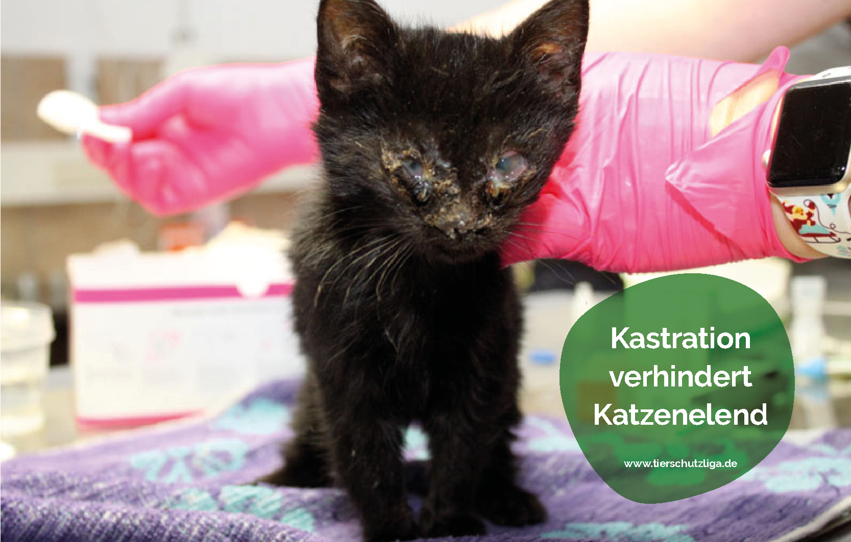 Standart-Beitrag-katzenelend Aktuelles - Tierschutzliga Dorf