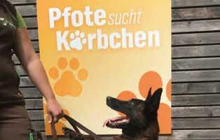 beitragsbild-jahresbericht-bueckeburg-2020 Jahresbericht Tierheim Bückeburg 2020