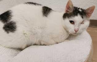 danke-maerz-uschi-update Katze Uschi wurde ein Auge entfernt