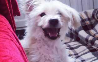 danke-maerz-willi1-update 14-jähriger Hund einfach entsorgt