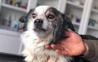 hund-knightley-maennlich.rumänien-6-Jahre Vier Hunde aus einem rumänischen Tierheim suchen Aufnahmepaten