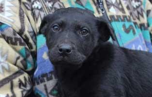 hund-mandela-maennlich-aufnahmepaten Sieben Hunde aus dem Tierheim Békéscsaba suchen Aufnahmepaten
