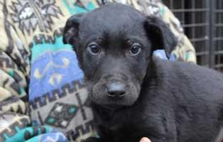 hund-nelson-maennlich-aufnahmepaten Rettet die Opas! Drei Hunde aus Polen suchen Aufnahmepaten