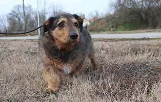 hund-pepito-herzproblem-gassi Vermittlungstier
