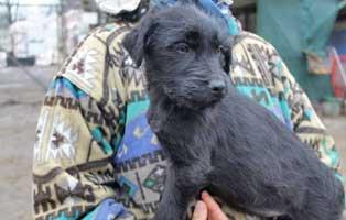 hund-shirley-weiblich-aufnahmepaten Sieben Hunde aus dem Tierheim Békéscsaba suchen Aufnahmepaten