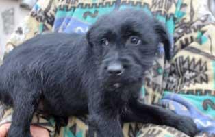 hund-shrek-maennlich-aufnahmepaten Sieben Hunde aus dem Tierheim Békéscsaba suchen Aufnahmepaten