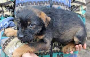 hund-sixty-weiblich-aufnahmepaten Sieben Hunde aus dem Tierheim Békéscsaba suchen Aufnahmepaten