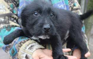 hund-spiky-maennlich-aufnahmepaten Sieben Hunde aus dem Tierheim Békéscsaba suchen Aufnahmepaten