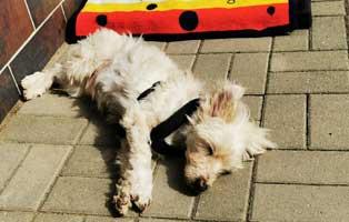 hund-willi-abgegeben-vernachlaessigt-geniesst-sonne 14-jähriger Hund einfach entsorgt