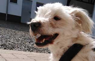hund-willi-abgegeben-vernachlaessigt-happy 14-jähriger Hund einfach entsorgt