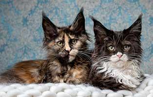 kastration-bei-katzen-blog Kompetente Tierarztberatung bei Fragen rund um Dein Tier