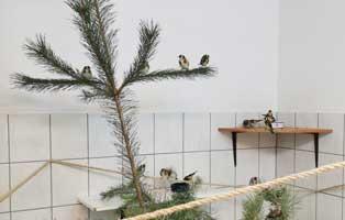 prachtfinken-aufgepaeppelt-freigelassen-baum Jahresbericht TIERSCHUTZLIGA-Dorf 2020