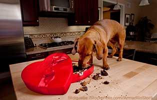 ratgeber-hunde-katzen-schokolade Tierratgeber - Was Sie über Ihr Tier wissen müssen