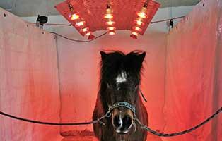 wardenburg-solarium-selbstgebaut-pony Tierschutzhof Wardenburg