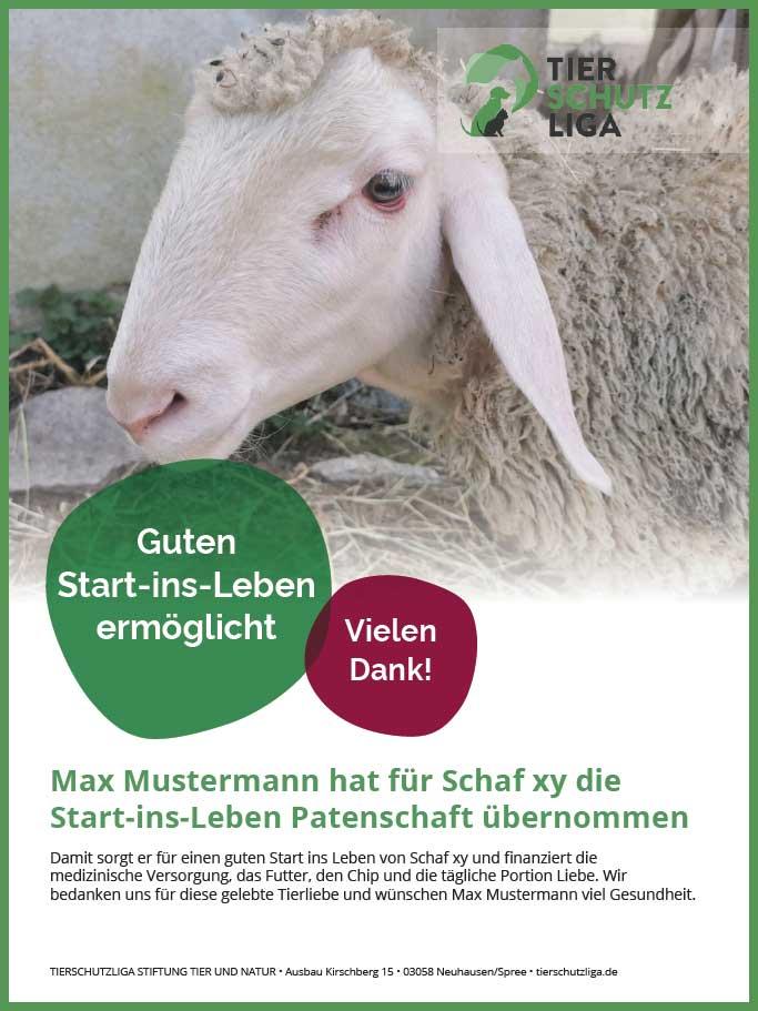 Urkunde-start-ins-leben-schafe 40 Schafe suchen Start-ins-Leben Paten Teil2