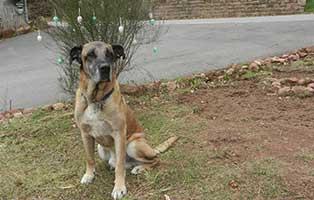 dogge-paul-zuhause-gefunden Tierische Geschichten - Lustiges und spannendes