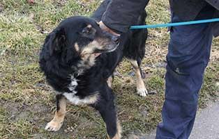 huendin01-3jahre-aufnahmepatenschaft Neun Hunde aus einem polnischen Tierheim suchen Aufnahmepaten