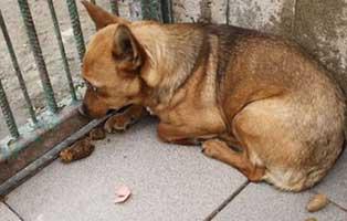 huendin02-9jahre-aufnahmepatenschaft Neun Hunde aus einem polnischen Tierheim suchen Aufnahmepaten