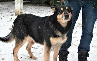 huendin03-breda-1jahr-aufnahmepatenschaft Neun Hunde aus einem polnischen Tierheim suchen Aufnahmepaten